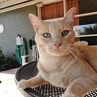 Adopt A Pet :: Drew (courtesy listing) - Baton Rouge, LA