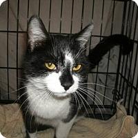 Adopt A Pet :: Reba - Jackson, NJ