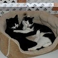 Adopt A Pet :: Holly and Rudy - Manchester, CT