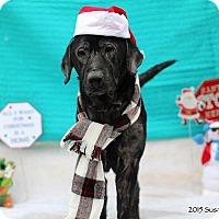 Adopt A Pet :: Jake #5 - Buckeystown, MD