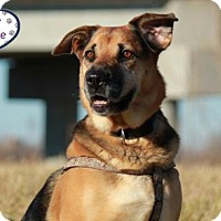Shepherd (Unknown Type) Mix Dog for adoption in Lee's Summit, Missouri - Sookie