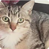 Adopt A Pet :: Jinny - Scottsdale, AZ