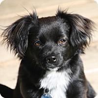 Adopt A Pet :: Cosmo - Edmonton, AB