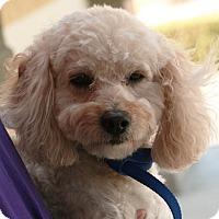 Adopt A Pet :: Brad - Palmdale, CA