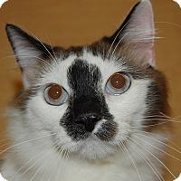 Adopt A Pet :: Face - Whittier, CA