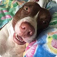 Adopt A Pet :: Janine Shepherd - Brooklyn, NY