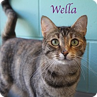 Adopt A Pet :: Wella - Bradenton, FL