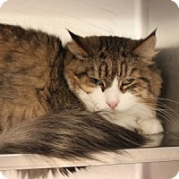 Adopt A Pet :: George - Naperville, IL