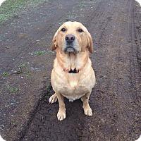 Adopt A Pet :: Gunner - Salem, OR