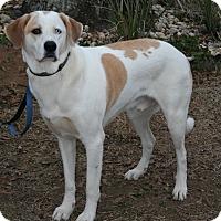 Labrador Retriever Mix Dog for adoption in Mobile, Alabama - Cooper