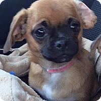 Adopt A Pet :: Wren - Gardena, CA