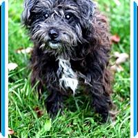 Adopt A Pet :: Kipper - Sullivan, IN