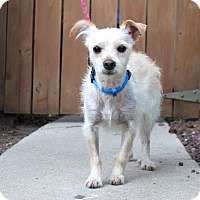 Adopt A Pet :: Ebenezer - Los Angeles, CA