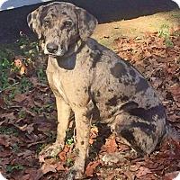 Adopt A Pet :: Dixie - Goodlettsville, TN