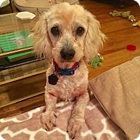 Adopt A Pet :: Fargo - Houston, TX