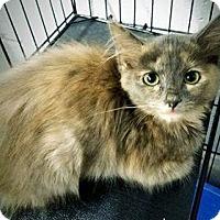 Adopt A Pet :: Hairball - Paducah, KY