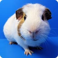 Adopt A Pet :: Martin - Lewisville, TX