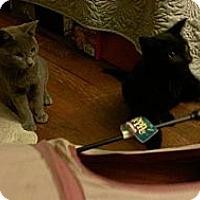 Adopt A Pet :: Minka - San Diego, CA