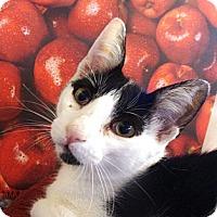 Adopt A Pet :: Lee - Albany, NY