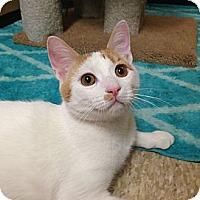 Adopt A Pet :: Tigger - Foothill Ranch, CA