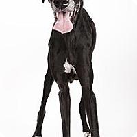 Adopt A Pet :: Abby - Mesa, AZ