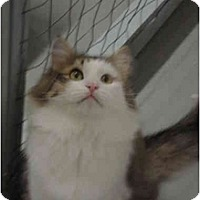 Adopt A Pet :: Donner - Mission, BC