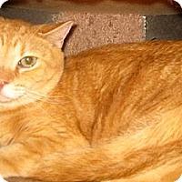 Adopt A Pet :: Big Boy - Dallas, TX