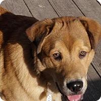 Adopt A Pet :: Chuck - Cleveland, OH
