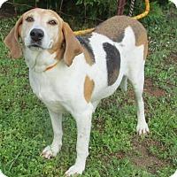 Adopt A Pet :: Angus - Elmwood Park, NJ
