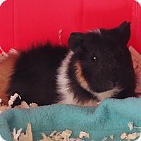 Adopt A Pet :: Brisbane - Fullerton, CA