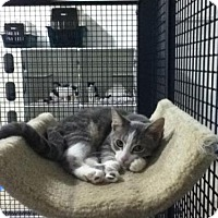 Adopt A Pet :: Henry - 'URGENT' - Caistor Centre, ON