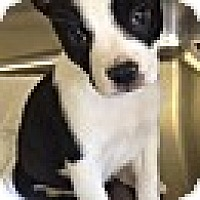 Adopt A Pet :: PANDA - EDEN PRAIRIE, MN