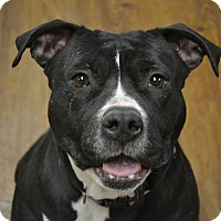 Adopt A Pet :: Shasta - Lake Odessa, MI