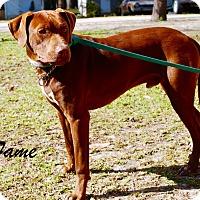 Adopt A Pet :: Fame - Daleville, AL