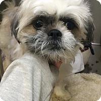 Adopt A Pet :: Uma - Oak Ridge, NJ