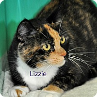 Adopt A Pet :: Lizzie - West Hartford, CT