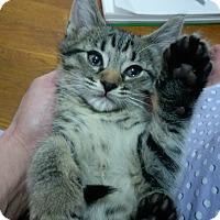 Adopt A Pet :: Skittles - Columbus, OH