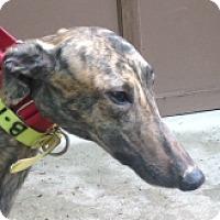 Adopt A Pet :: Crazymedusa - Gerrardstown, WV