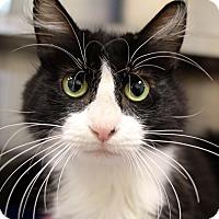 Adopt A Pet :: Acai - Sarasota, FL