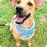 Adopt A Pet :: Shan Shan - Vancouver, BC