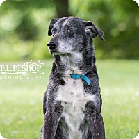 Adopt A Pet :: Ray - Mansfield, OH