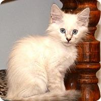 Adopt A Pet :: Belinda Blue - Davis, CA