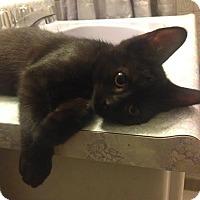 Adopt A Pet :: Deimos - Toronto, ON