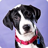 Adopt A Pet :: Nine - Houston, TX