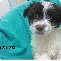Adopt A Pet :: Paxton - Bartonsville, PA