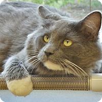 Adopt A Pet :: Rambler - Chambersburg, PA