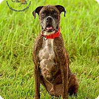 Adopt A Pet :: Creed - Friendswood, TX