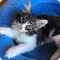 Adopt A Pet :: Sofia - Fort Worth, TX