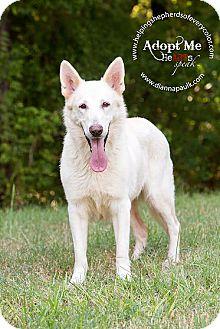 German Shepherd Dog Dog for adoption in Montgomery, Alabama - Trixie