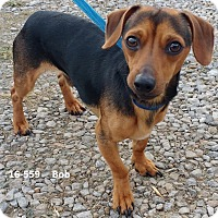 Adopt A Pet :: Bob - Cannelton, IN